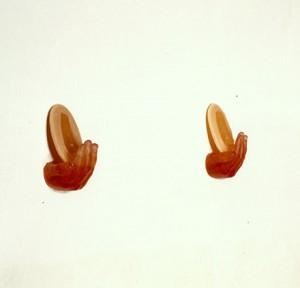 PREFIERO-LAS-QUE-NACEN-DE-MIS-SUENOS-1990-Resina-de-poliester-estearina-y-cera-184-x-15-x-8-cm
